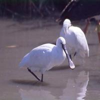 Parc ornithologique, Pont de Gau, Saintes-Maries-de-la-Mer
