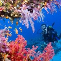 Frumusete subacvatica
