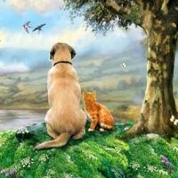 ANIMALEMENT VOTRE