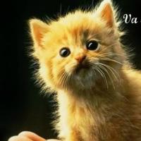 pisicutele