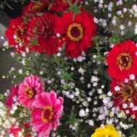Flori de vară