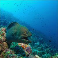 Reciful de coral