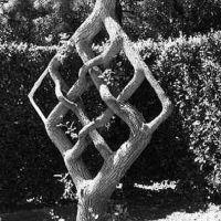 arborii lui Axel Erlandson