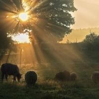 Poesie de la nature - sauvage
