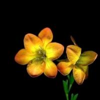 Flower - varia - on - Black