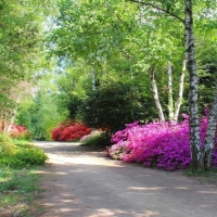 Arboretum