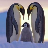 Natuurfotografie lieve