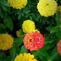 Des fleurs( suite)