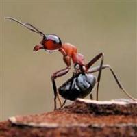 Macrofotografie - insecte