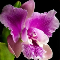 Orchid-s-For-You