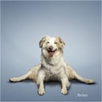 Yoga Canina.