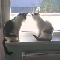 Pisicile reflecteaza