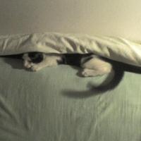 Grea e viata de pisica