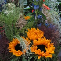 Netherlands - Flower show 2012...