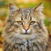 Politiek en katten