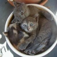 Sieste pentru animale