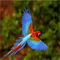 Pantanal in Brazilia si Bolivia