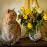 Still life cu pisici
