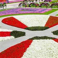 Dubai-Gradina cu flori