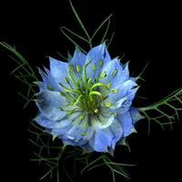 Toate florile din lume