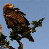 Lectia vulturului