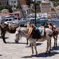 itinerar balcanic 25 Grecia - la plimbare prin Hydra a