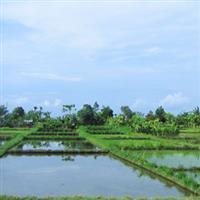 Bali61 Arta teraselor de orez