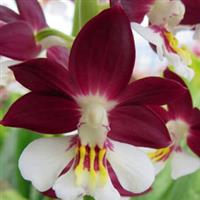 Curiozitati florale