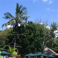 Bali21 Sanur & Green