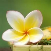 Bali23 Colorful Island