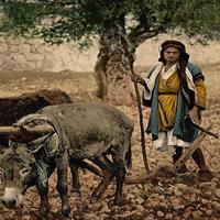 Capitolul 22 din Deuternomul - Biblie
