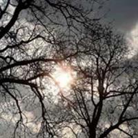 Copaci desfrunziţi