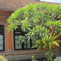Bali71 Balinese woodcarving1