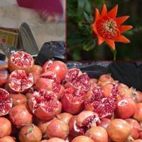 Iran Tabriz  Marele Bazar