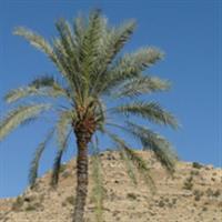 Iran Bishapur3