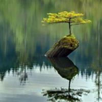 Natura nu se lasă învinsă