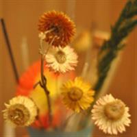 Flori de primavara si nu numai...