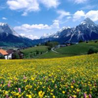 Frumusetile naturi