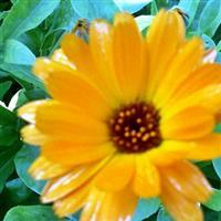 Flori si florescente