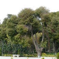 Iran Esfahan Cehel Sotun Palace5