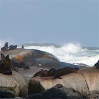 Africa de Sud, Hout Bay1