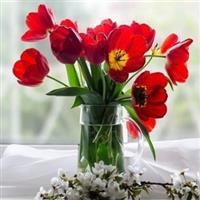 Flori din gradina mea