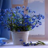 Flori și versuri