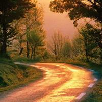 Drumuri in padure