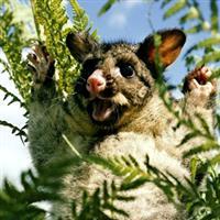 La Tasmanie
