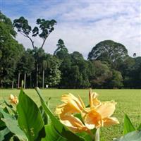 Sri Lanka, Peradenia7