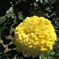 Flori naturale