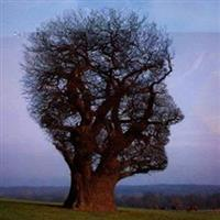 Amazing man shaped trees
