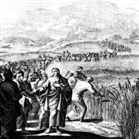 Capitolul 12 Partea I din Matei – Biblie Noul Testament