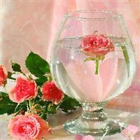 Rame și flori